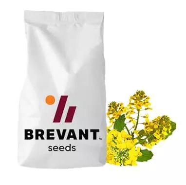 ПР44Д06, PR44D06 насіння озимого ріпаку, Круїзер Brevant (Бревант)