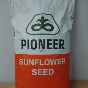 Насіння соняшника Піонер (Pioneer)