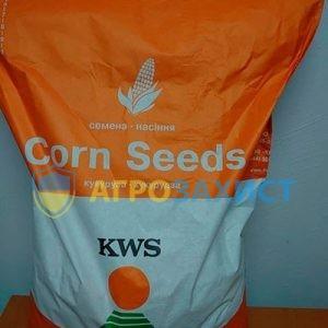 Насіння кукурудзи КВС (KWS)