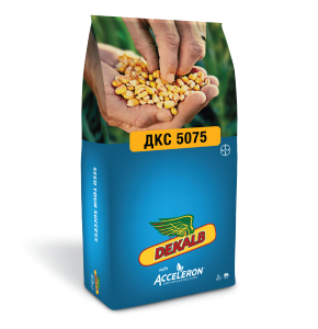DKC 5075, ФАО 410, насіння кукурудзи ДКС Monsanto (Dekalb)