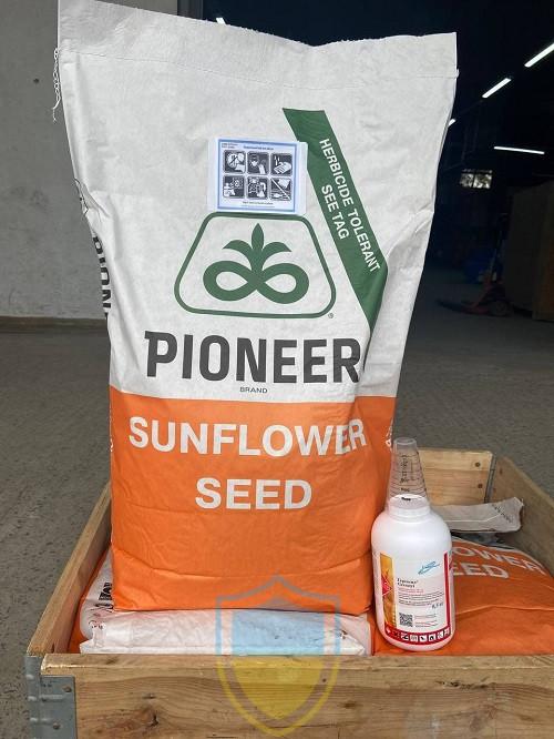 П64ЛЕ136 Pioneer (під Гранстар), насіння соняшника P64LE136 Піонер